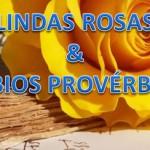 LINDAS ROSAS E SÁBIOS PROVÉRBIOS (PPS)