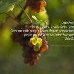 João 15.5 – Papel de Parede