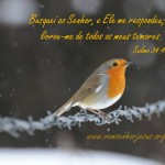 Salmo 34.4 – Papel de Parede