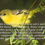 FORÇA NA FRAQUEZA (Vídeo)