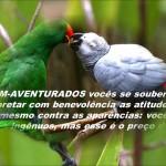 BEM-AVENTURANÇAS CONTEMPORÂNEAS (Vídeo)