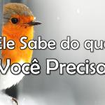ELE SABE DO QUE VOCÊ PRECISA (vídeo)